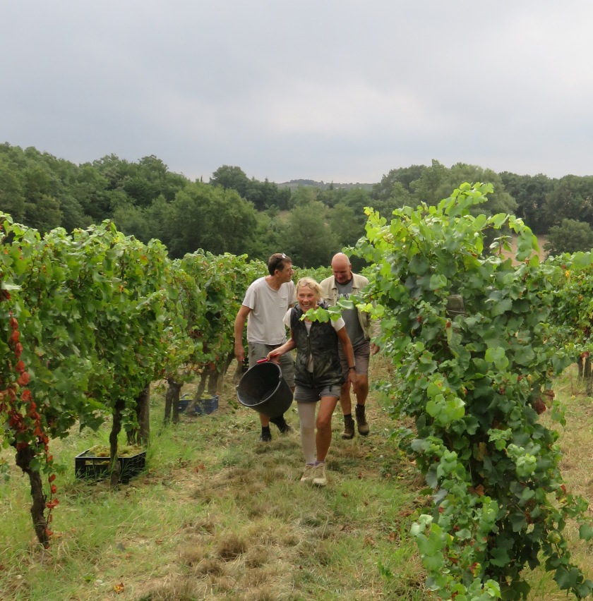 The chatelaine Ief Van Meegeren leading the pickers out of the vines